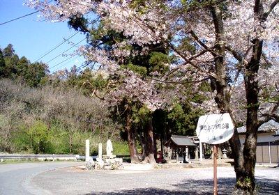 大きな桧のある神社@児玉町稲沢