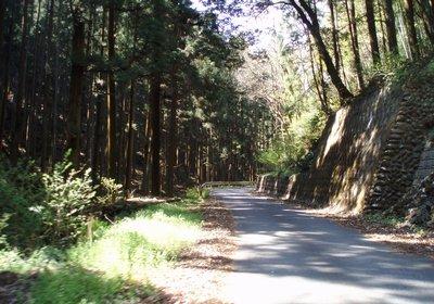 木陰になっている林の中