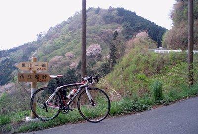 まだ桜の残る猿岩線終点近く@花立ノ松峠