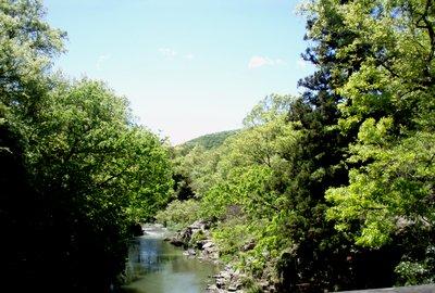 新緑の嵐山渓谷