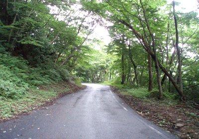 奥武蔵・東秩父の林道