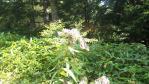 2011_0908_131756-DVC00145.jpg