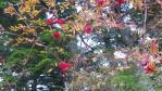 2011_1015_161343-DVC00069.jpg