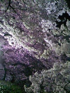 20090408-2.jpg