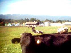 実践大牛2001