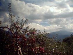 りんご2001