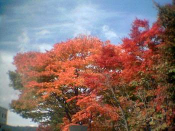 紅葉景色6001