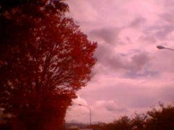 紅葉景色8001