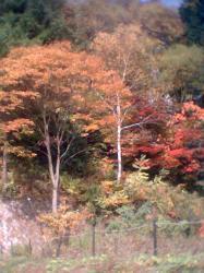 紅葉景色3001
