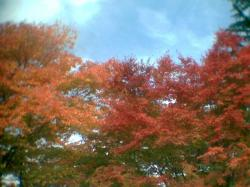 紅葉景色5001
