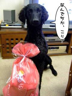 ジンガ1歳お誕生日いいいぃぃっ!!(7)