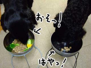 ジンガ1歳お誕生日いいいぃぃっ!!(2)