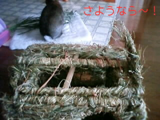 PA0_0534.jpg