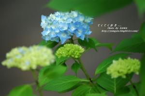 2DSC_90760001.jpg