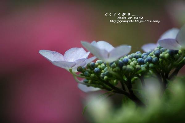 7DSC_91610001.jpg