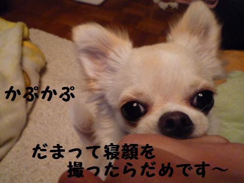 P1020211_convert_20080530165708.jpg