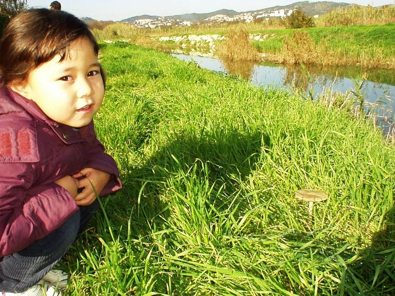 kinoko200811.jpg