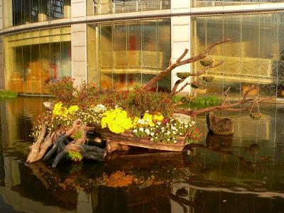 写真キャプション=公園内にあるスポーツクラブ前の池に寄せ上された秋の花々