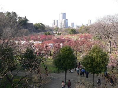 写真キャプション=大阪城公園の東側に拡がる広大な梅林