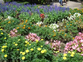 平泉のお花たち
