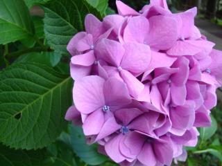 平泉のお花たち4