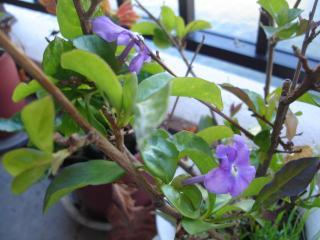 香りの強い花