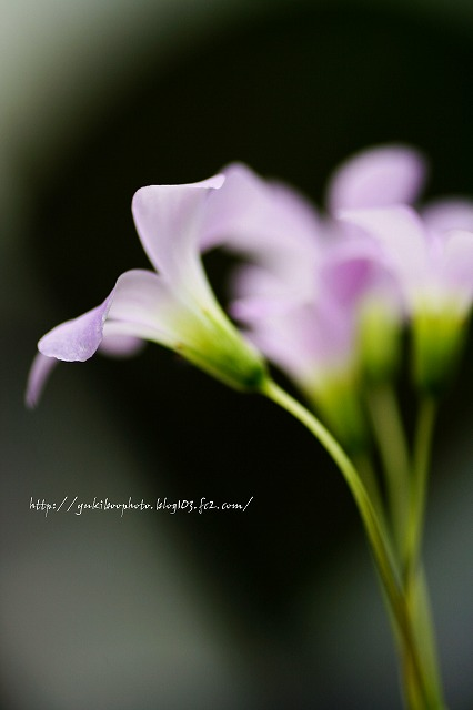 ちっちゃい花2