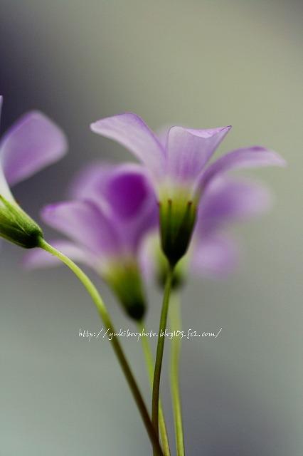 ちっちゃい花3