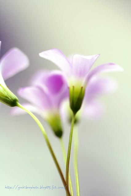 ちっちゃい花4