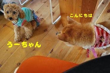うーちゃん