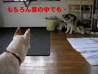 20060603235408.jpg