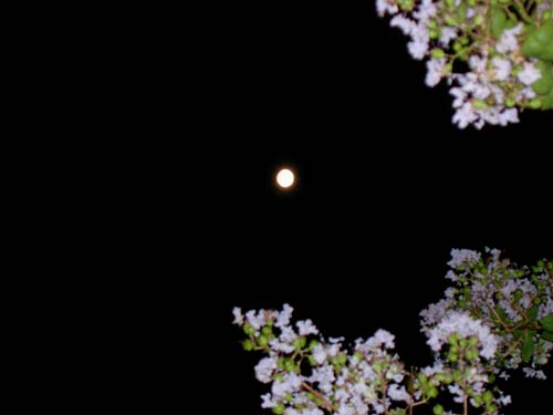f_moon_3.jpg