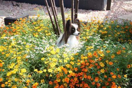 ジニアリネアリスの庭