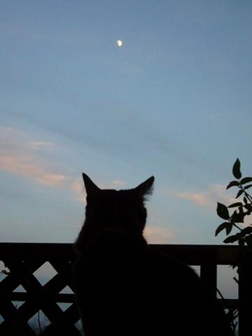 空を見るすもも
