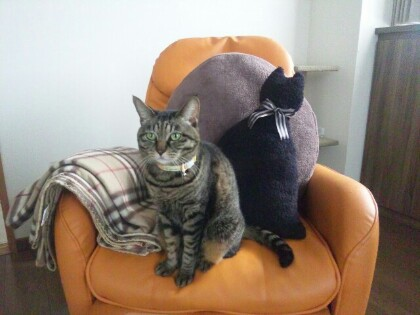 ミュウと黒猫