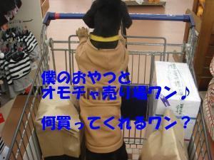 DSC01550_convert_20080302163926.jpg