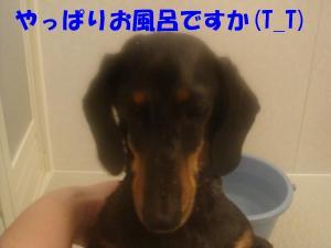 DSC01557_convert_20080302181021.jpg