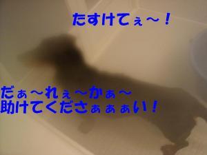 DSC01559_convert_20080302181101.jpg