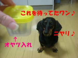 DSC01562_convert_20080302181319.jpg