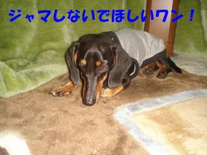 DSC01581_convert_20080308092143.jpg