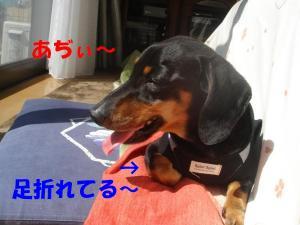 DSC01598_convert_20080309101332.jpg