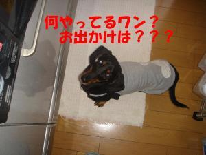 DSC01600_convert_20080309101548.jpg