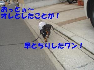 DSC01605_convert_20080309183826.jpg