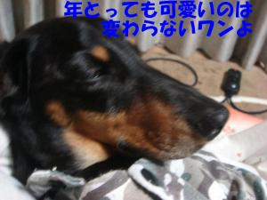 DSC01692_convert_20080312233139.jpg