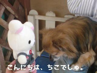 ちこちゃん日記8★お出かけ♪ワンワンと一緒★-3