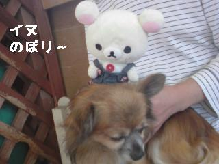 ちこちゃん日記8★お出かけ♪ワンワンと一緒★-5