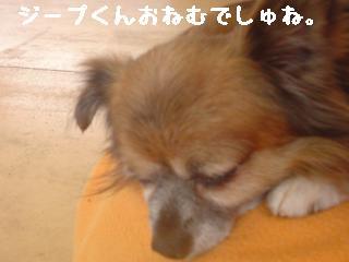 ちこちゃん日記8★お出かけ♪ワンワンと一緒★-6