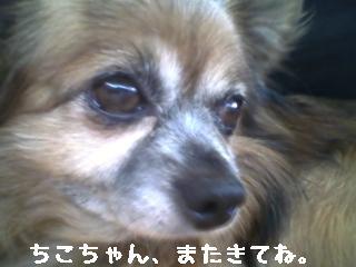ちこちゃん日記8★お出かけ♪ワンワンと一緒★-7