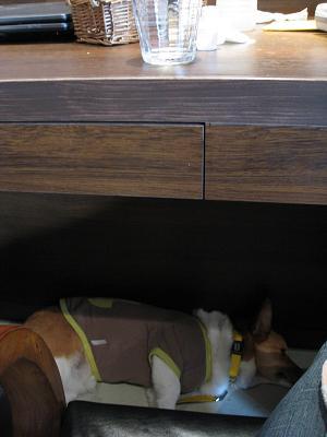 テーブルの下で寝る3.12