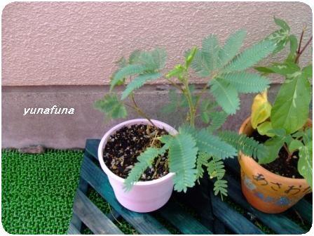 2008_0624yunafunaブログ用0006